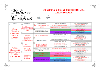 Pedigree Certificate With Calligraphic Effects